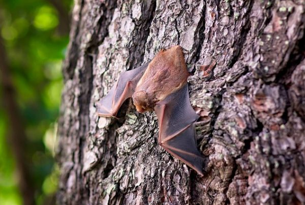 Ohio Bat Removal