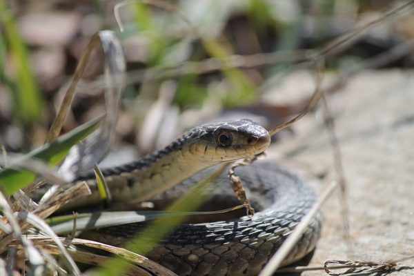 Ohio Snake Removal