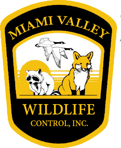 Miami Valley Wildlife Control in Ohio